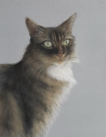 Ellie cat